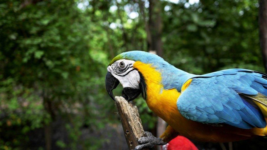 Leacul pentru dezamăgire – papagalul cu un singur picior–