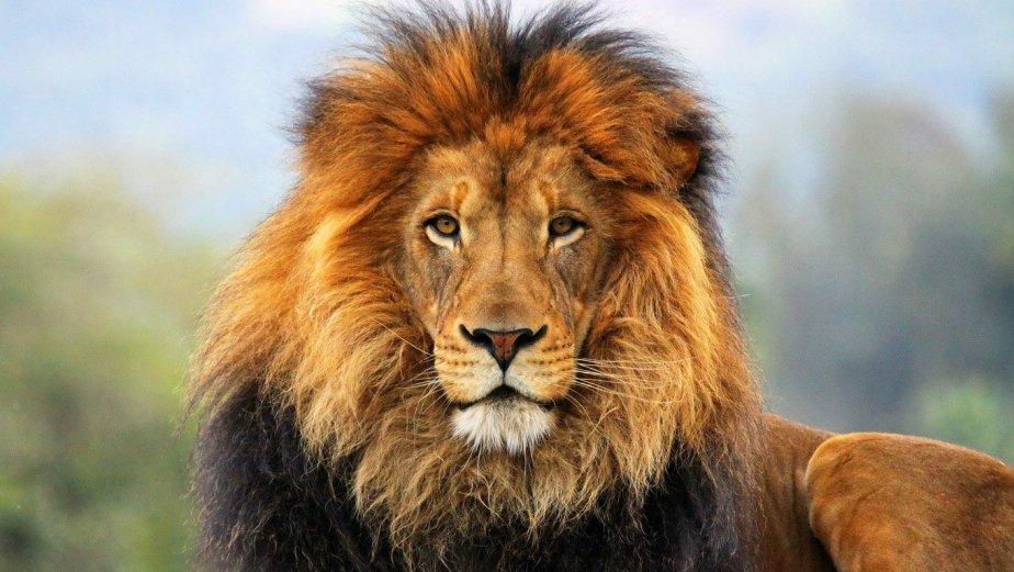 Leul Aslan, Regele, este periculos. Dar estebun