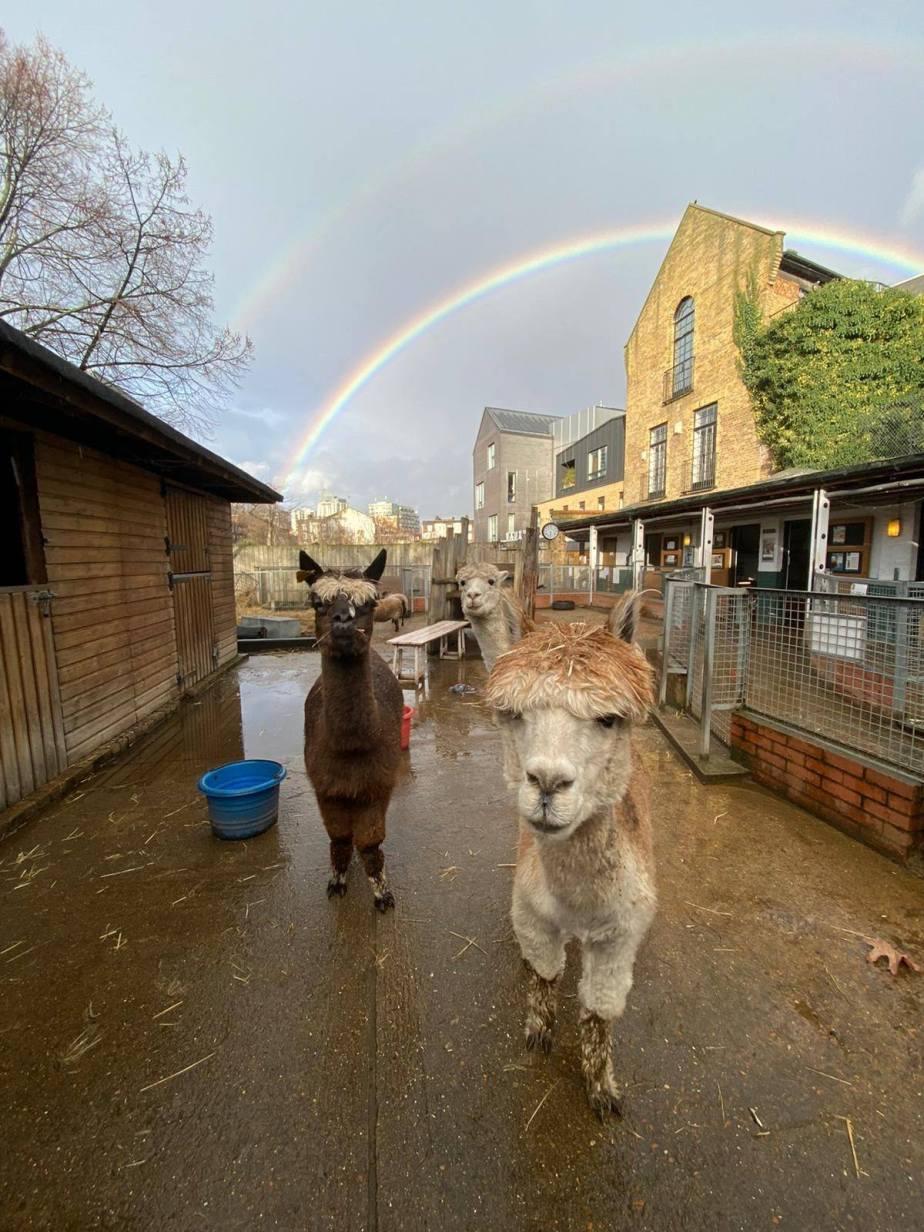 Vauxhall City Farm | Ferma urbana pentru familii / copiiLondra