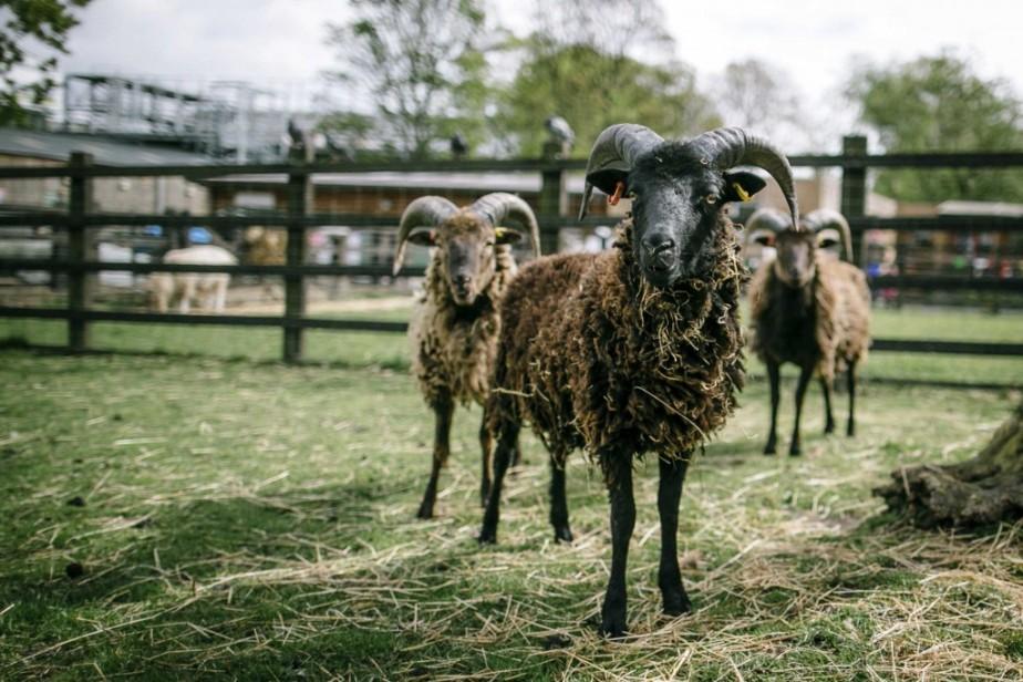 Stepney City Farm | Ferma urbana pentru familii / copiiLondra