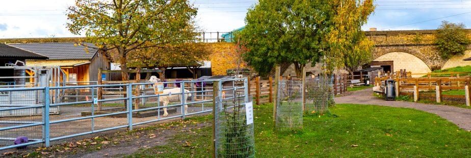 Brooks Farm | Ferma urbana pentru familii / copiiLondra
