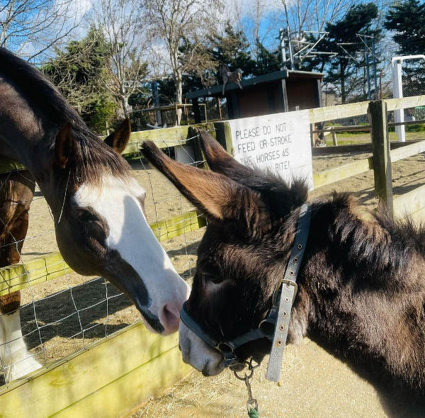 Kentish Town City Farm | Ferma urbana pentru familii / copiiLondra
